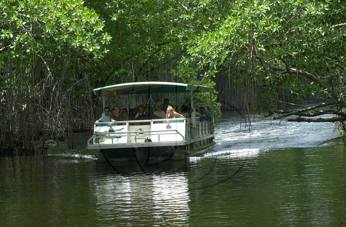 BLACK RIVER SAFARI TOUR & SOUTH COAST